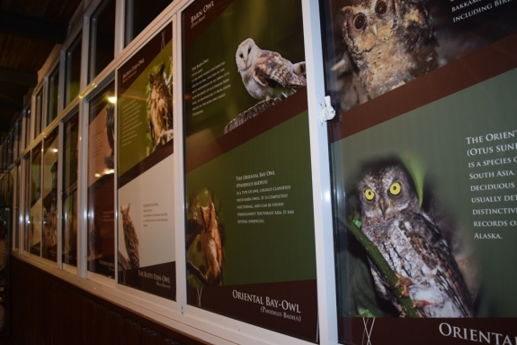 owl museum penang malaysia (2)